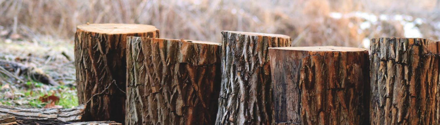 Certified Arborists Give their Tree Removal Central Coast Tips